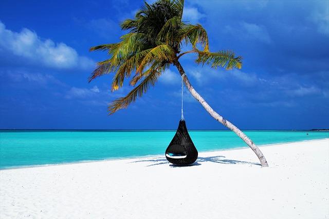 tropisch eiland met palmboom en hangmat.