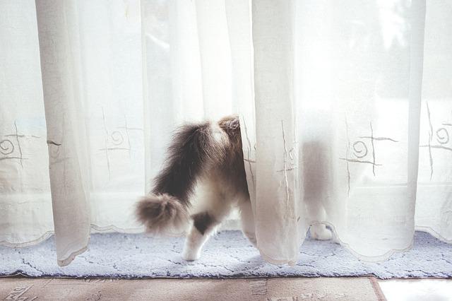 kat loop door gordijnen en veroorzaakt alarm