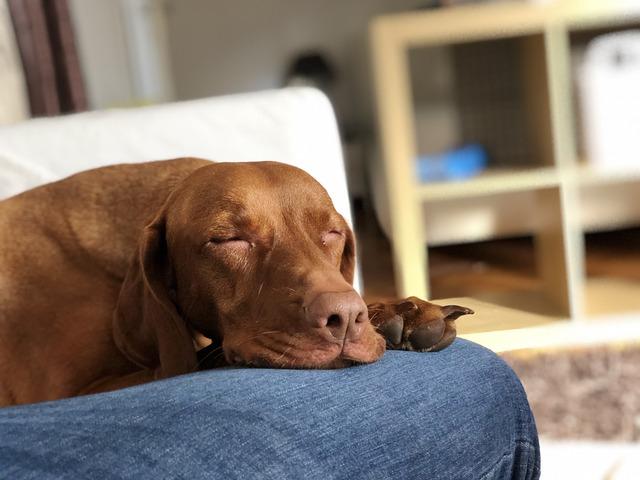 een huisdier kan een loos alarm veroorzaken